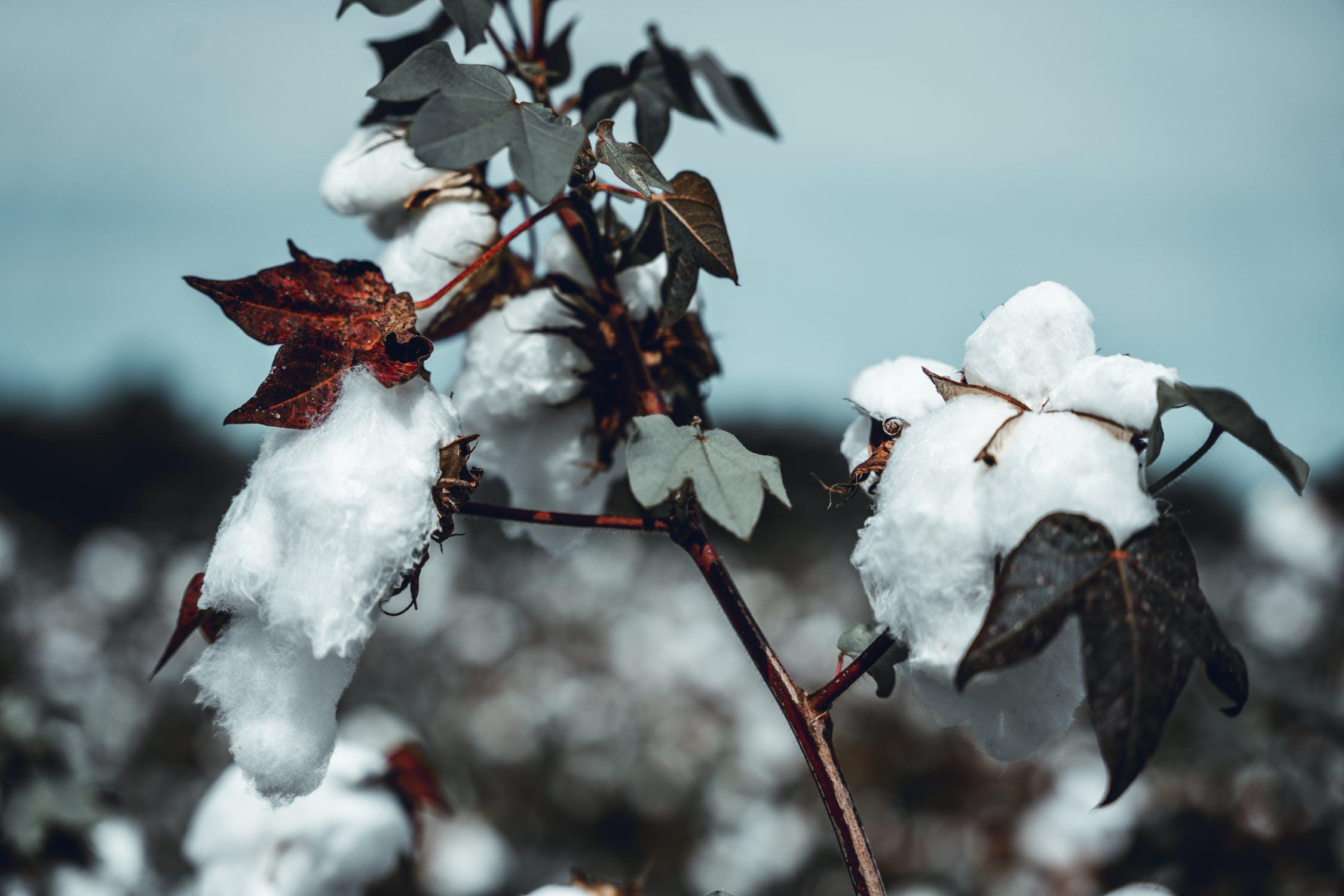 Modeindustrins påverkan på klimatet